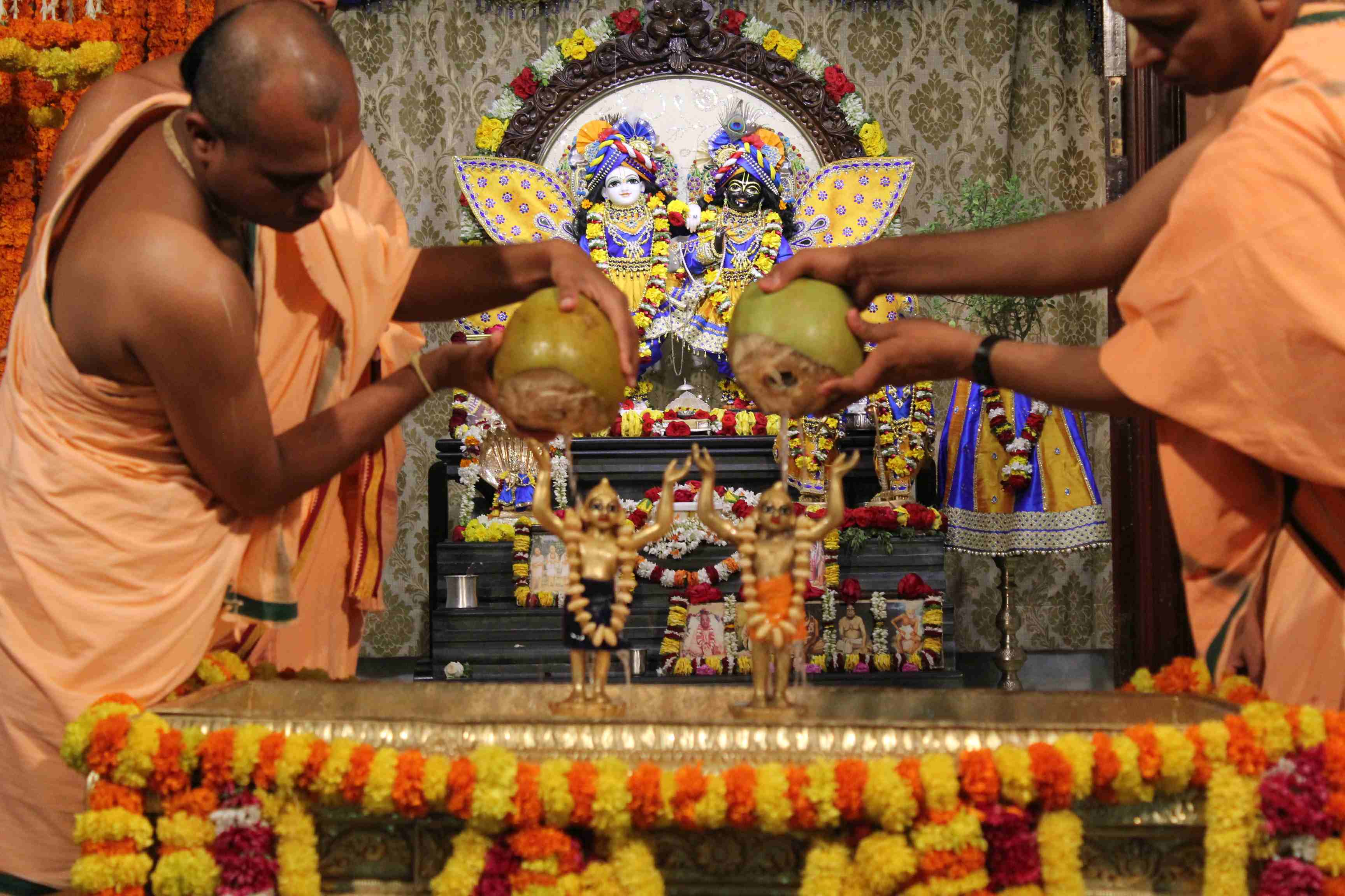 Sri Nityananda & Gauranga receiving Abhisheka with Tender Coconut Water